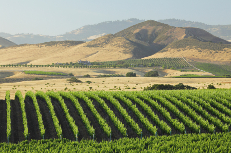 Los Olivos vineyard and hills