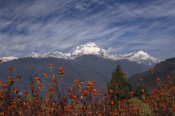 Himalaya Meadow and Mtns pic_copy