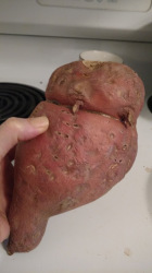 walrus sweet potato