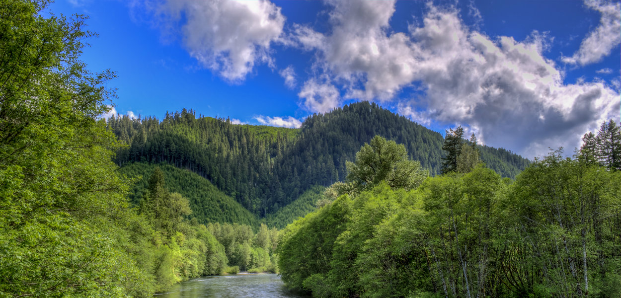 McKenzie River Daytime by Mike Shaw - RIGHTS FREE (2) resize