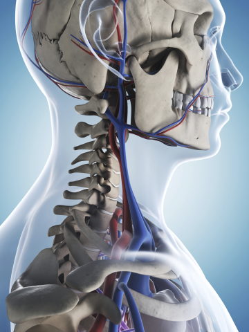 Physical Therapy for Neck Pain Offered in Denver CO
