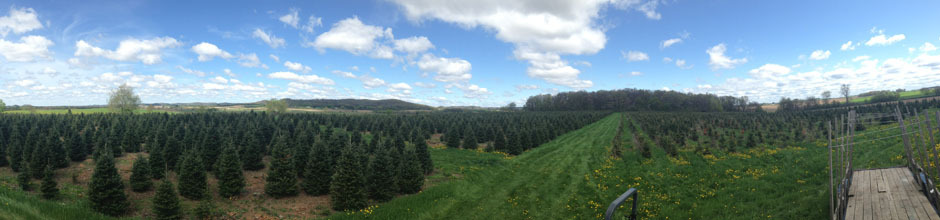 Comstock Trees farm
