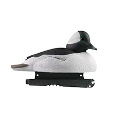 bufflehead_duck_hunting