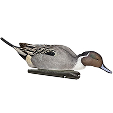 pintail_hunting