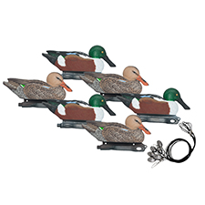 northern_shoveler_hunting