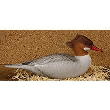 common_merganser_hunting
