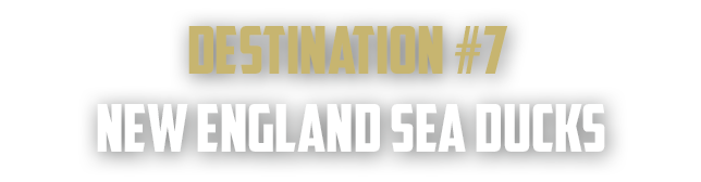 new-england-sea-duck-hunting