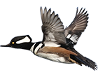 ontario-duck-hunting-guides