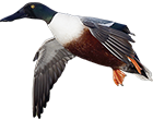 mexico-guided-duck-hunts