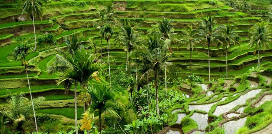 Yoga in Daily Life Retreat Bali
